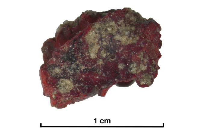 Piece of red trinitite found in 1945 at the site of the first nuclear explosion.  Inside, a ten micron quasi-crystal was found.